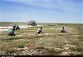 تکرار/ سرنوشت اقلیم خوزستان در کمین گلستان؛ 300 هزار هکتار از اراضی گلستان در معرض بیابانی شدن
