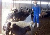 Crimean–Congo Fever Outbreak under Control: Iranian Official