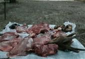 البرز|شکارچی غیرمجاز در طالقان دستگیر شد
