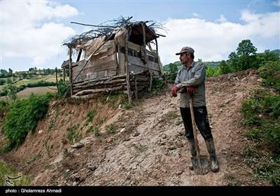 شالیزار در مازندران