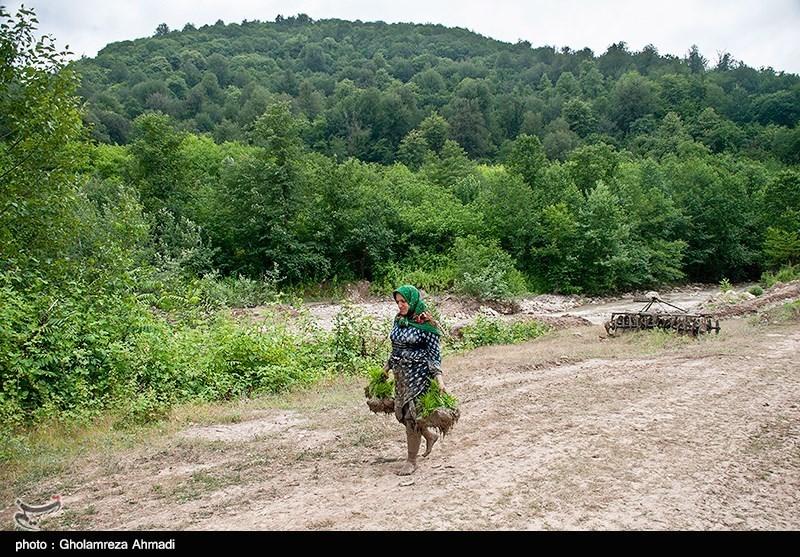 https://newsmedia.tasnimnews.com/Tasnim/Uploaded/Image/1397/03/09/1397030910565864614273014.jpg