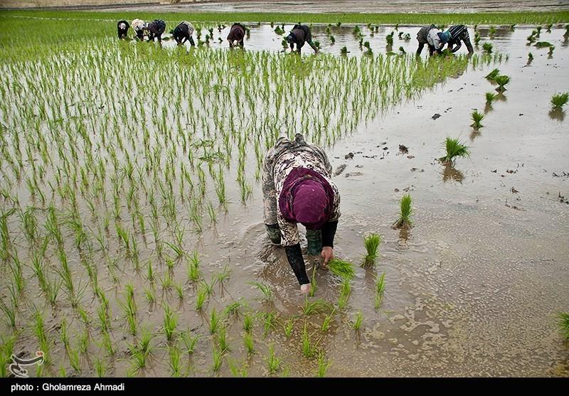 https://newsmedia.tasnimnews.com/Tasnim/Uploaded/Image/1397/03/09/1397030910565886514273014.jpg