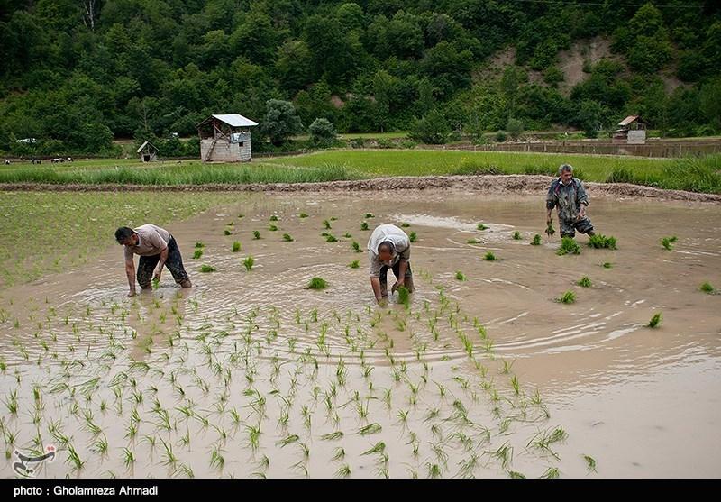 https://newsmedia.tasnimnews.com/Tasnim/Uploaded/Image/1397/03/09/1397030910570024014273014.jpg