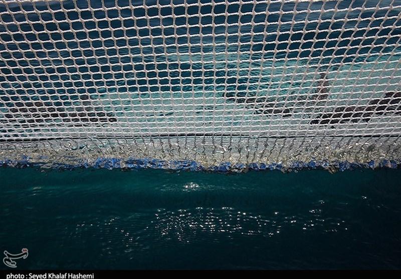 آموزش رایگان پرورش ماهی در قفس توسط موسسه تحقیقات شیلات