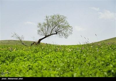طبیعت منطقه امند زنجان