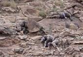 شلیک موشک بالستیک به تجمعات مزدوران در ساحل غربی/چند نظامی سودانی در صحرای میدی به هلاکت رسیدند