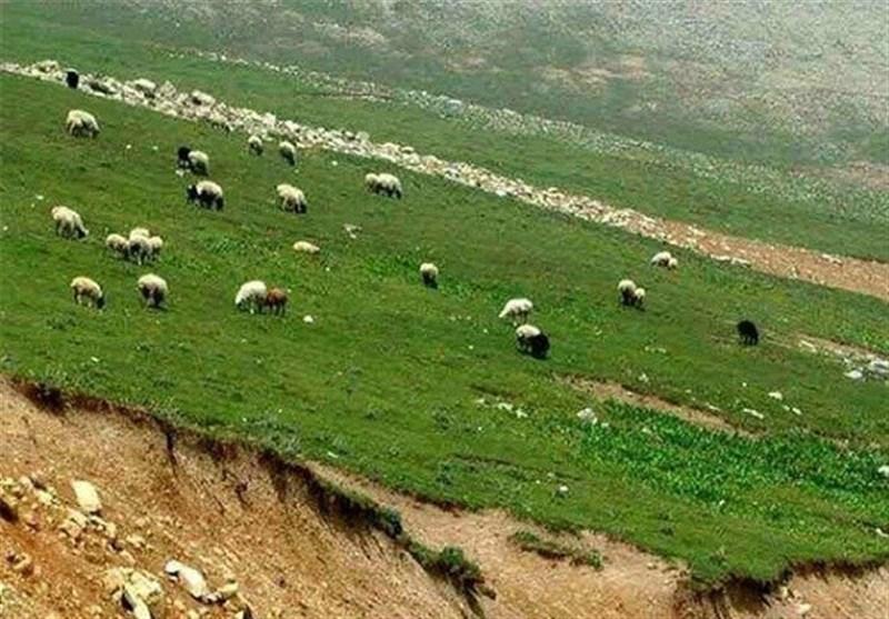 مهلت 24 ساعته به عشایر برای ترک منطقه حفاظتشده بدر و پریشان