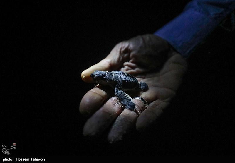 حرکت لاکپشتی خصوصیسازی