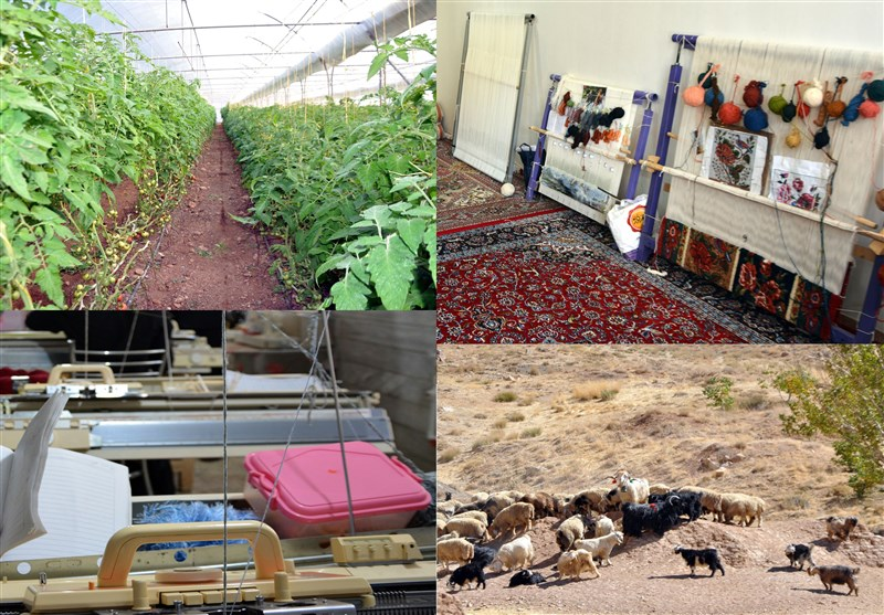 بوشهر|اختصاص 60 میلیارد تومان برای اجرای طرحهای خوداشتغالی روستایی