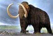 """کشف دو قطعه فسیل دندان """"ماموتها"""" با سن 2 میلیون سال در ایران"""