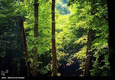 همچنین درختان سربه فلک کشیده راش، ممرز، توسکا، خرمندی، انجیری، رستنی ها گوناگون و گلهای رنگارنگ پیرامون آبشارلونک و همچنین آب و هواى مساعد، زیبایى و جذابیت ویژه اى به این آبشار بخشیده است
