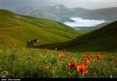 Iran's Beauties in Photos: Shekardasht Countryside