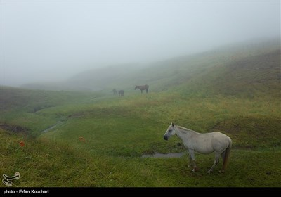 Iran's Beauties in Photos: Shekardasht Countryside