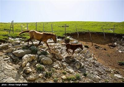 طبیعت ییلاقی گیلان
