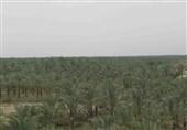 رسیدگی به پروندههای قضایی در حوزه کشاورزی استان بوشهر در اولویت قرار دارد