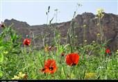 """منطقه گردشگری""""خان دره سی""""ارومیه به روایت تصویر"""