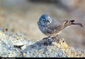 نخستین نمایشگاه عکس گروهی پرندهنگری بختگان در شیراز برگزار میشود