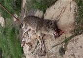 عامل کشتار گرگ آشنویه محاکمه شده است