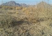 بحران خشکسالی در گلستان| شرایط بسیار سخت گلستان در سال 1400 / آیا کشت برنج ممنوع میشود؟