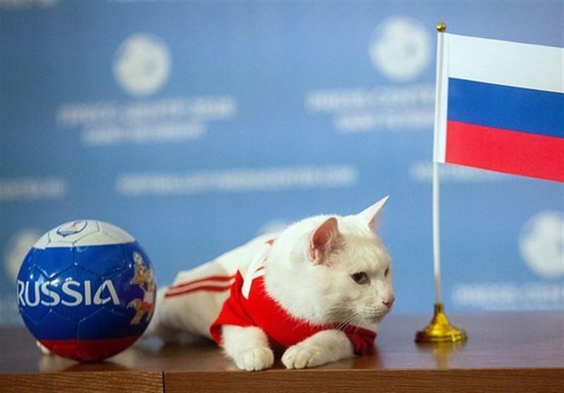 جام جهانی 2018| گربه پیشگوی روس چه تیمی را برنده نبرد روسیه و مصر اعلام کرد؟ + عکس