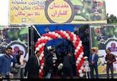 مازندران| برپایی جشنواره تمشک ساحلی شمال ایران+ تصاویر