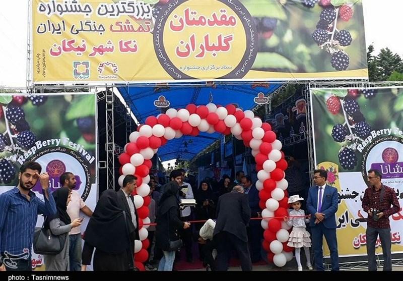 مازندران  برپایی جشنواره تمشک ساحلی شمال ایران+ تصاویر