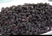 بازار گرم میوههای نوبرانه در ارومیه؛ مردم توان خرید ندارند