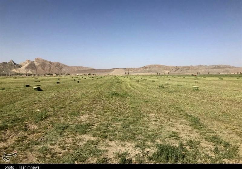 خوزستان| مدیر جهاد کشاورزی رامشیر از تعطیلی برخی کارگاههای جهاد نصر انتقاد کرد