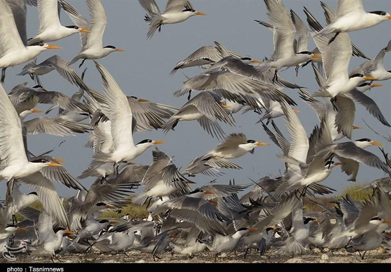 آیا شایعه شیوع آنفلوانزای فوقحاد پرندگان در استان بوشهر صحت دارد؟