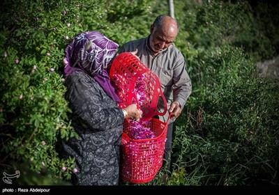 Tebriz'de Gül Muhammedi Şenliği