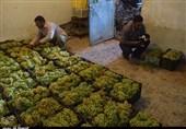 اصفهان| کارگاههای سنتی تولید شیره انگور در شهرضا ساماندهی میشود
