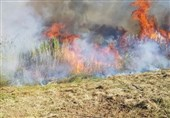 تحولات فلسطین| 17 آتشسوزی در سرزمینهای اشغالی به دلیل پرتاب بادبادک آتشین