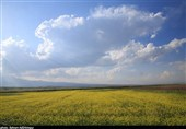 توصیههای هواشناسی کشاورزی تا 2 شهریور به تفکیک استان