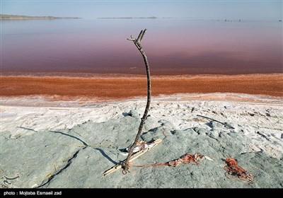 قرمز شدن آب دریاچه ارومیه