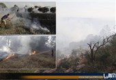 وقوع 4 آتش سوزی در شهرکهای صهیونیستنشین