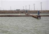 17میلیارد تومان برای توسعه زیرساختهای طرحهای شیلات استان بوشهر تخصیص یافت