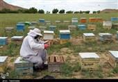 عسل تولیدی استان سمنان صادراتی میشود