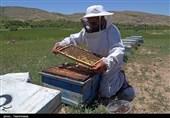 اقتصاد بدون نفت| پرورش زنبور عسل در مراتع بجنورد به روایت تصویر