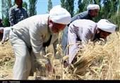 برداشت گندم توسط نماینده ولیفقیه در خراسان شمالی بهروایت تصویر