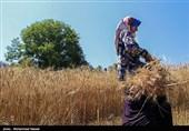 واگذاری رایگان بیش از 5500 زمین کشاورزی و مسکونی به محرومان