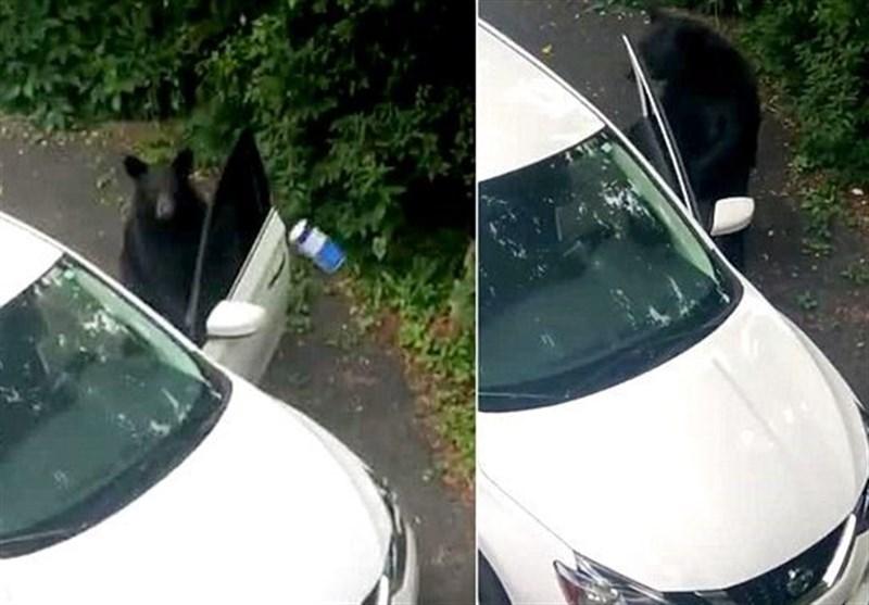 سارق پشمالوی آبنبات در حال بازکردن در اتومبیل + فیلم