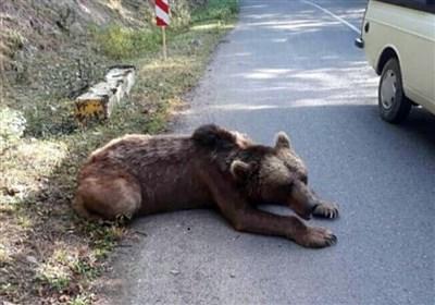 کشتار خرس با اسلحه شکاری در ارتفاعات ماسال