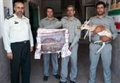 سیاهگوش (کاراکال) ساکن در قفس اداره کل محیط زیست مفقود شد