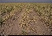 لنگر خشکسالی در خراسان جنوبی/ دسترنج یکساله کشاورزان از بین رفت