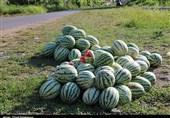 16 حقیقت جالب در مورد هندوانه