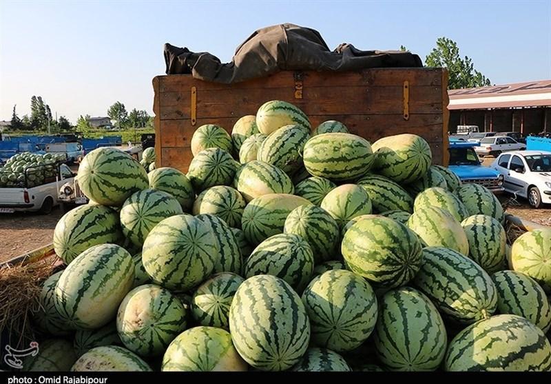 فشار هندوانه بر تنش آبی ایران/ خروج 220 میلیارد لیتر آب با هندوانه از کشور