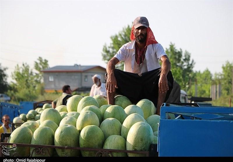 قیمت هندوانه تا 400 تومان کاهش یافت + نرخ انواع میوه