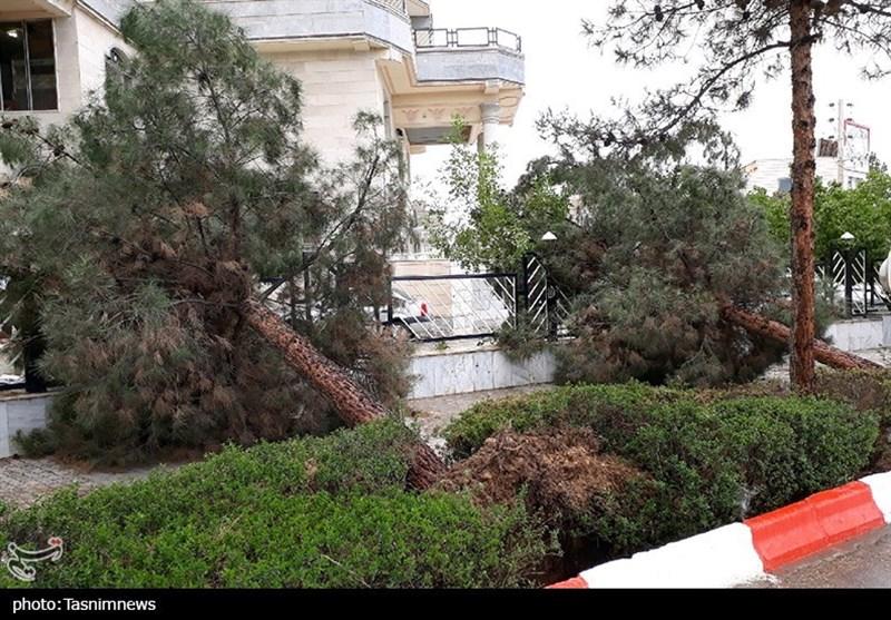 طوفان شدید خراسان شمالی را در نوردید؛ از جا کنده شدن چندین اصله درخت در بجنورد+تصاویر