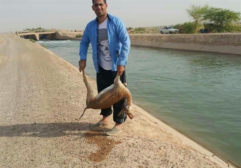 کانال سازمان آب و برق یک آهوی دیگر را به کام مرگ کشاند