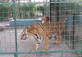 باغ وحش ارومیه فاقد استانداردهای لازم برای نگهداری از حیوانات؛ درآمد باغوحش به صفر رسید
